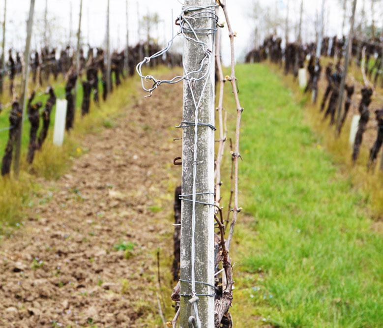 Die Bodenbearbeitung im Weinberg