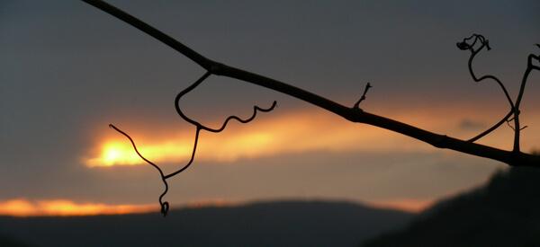 Sonnenuntergang im Silvaner-Weinberg bei Wirmsthal