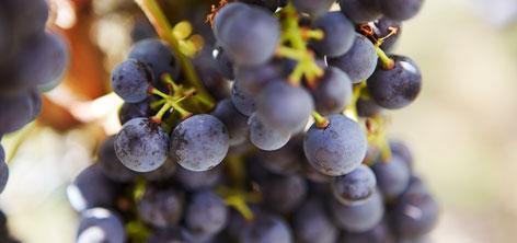Rotweinpaket mit Regen, Schwarzriesling und Domina