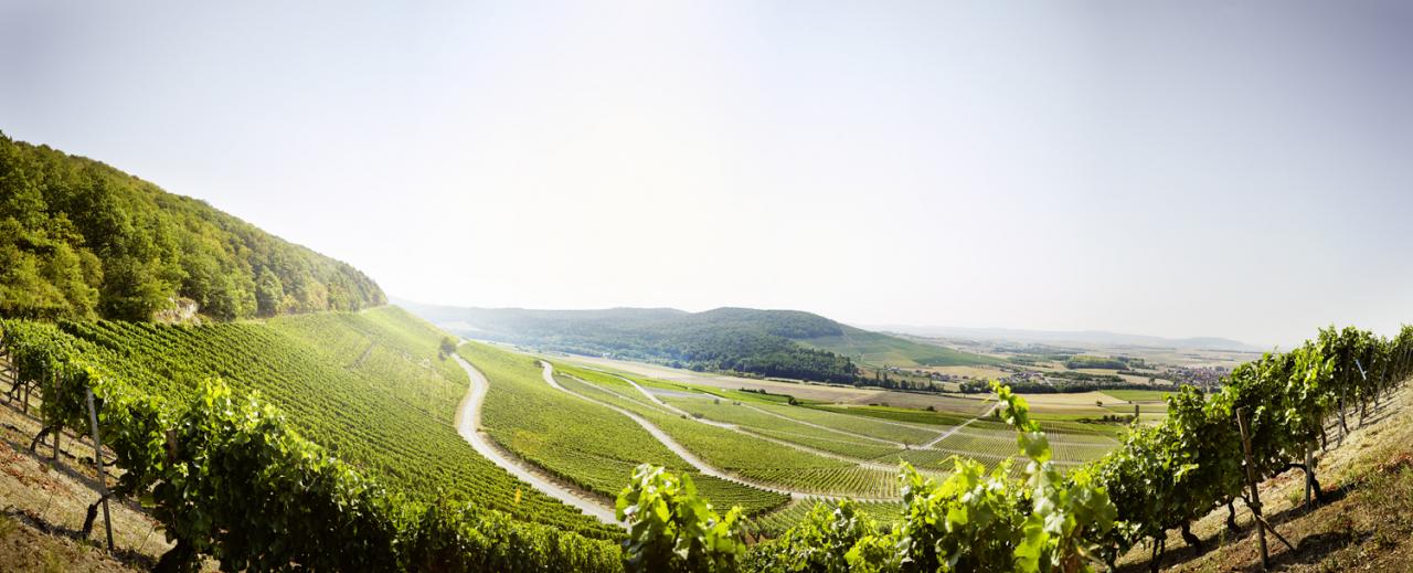 Die mainwein Weinbistros