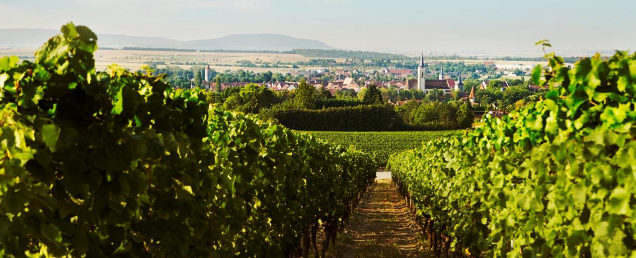 Blick auf das wunderschöne Weinland und Iphofen.