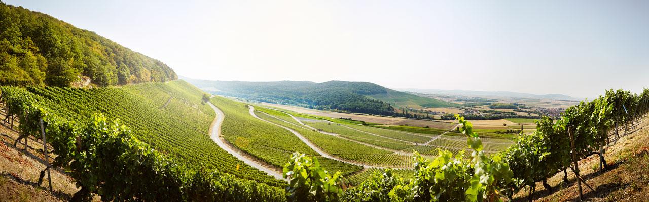Wunderschöner Panoramablick auf die Weinberger der Volkacher Mainschleife