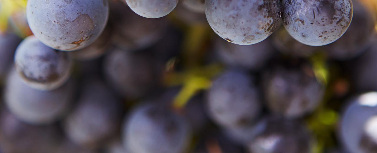 Erfahren Sie mehr über die GWF-Weine in unserem Weinwissen. Werden Sie zum Frankenweinexperten!