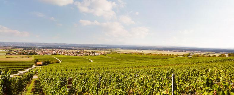 Charivari und GWF Frankenwein