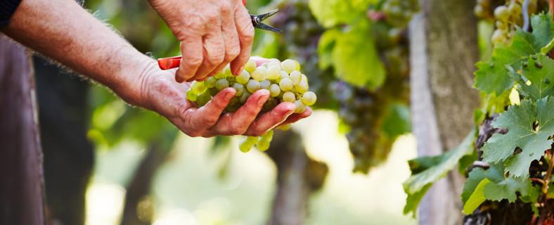 Neben diverser internationaler und nationaler Auszeichnungen (AWC-Vienna, DLG, Landkreispreis des Fränkischen Weinbauverbands), punkteten die GWF-Weine bei der International Wine & Spirit Competition (IWSC) und beim Gault&Millau.