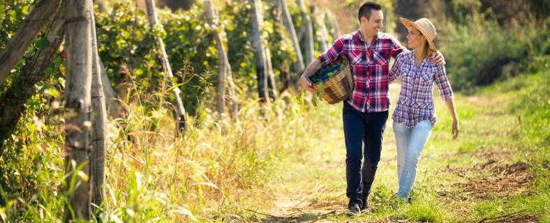 Ökologischer Weinbau beginnt im Weinberg. Gesunde Böden und Reben sowie die Schonung der Nützlinge sind die Grundlagen unseres ökologischen Weinbaus.